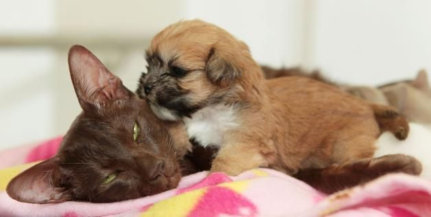 This Precious Cat Gave This Rejected Shih Tzu Puppy A New Family