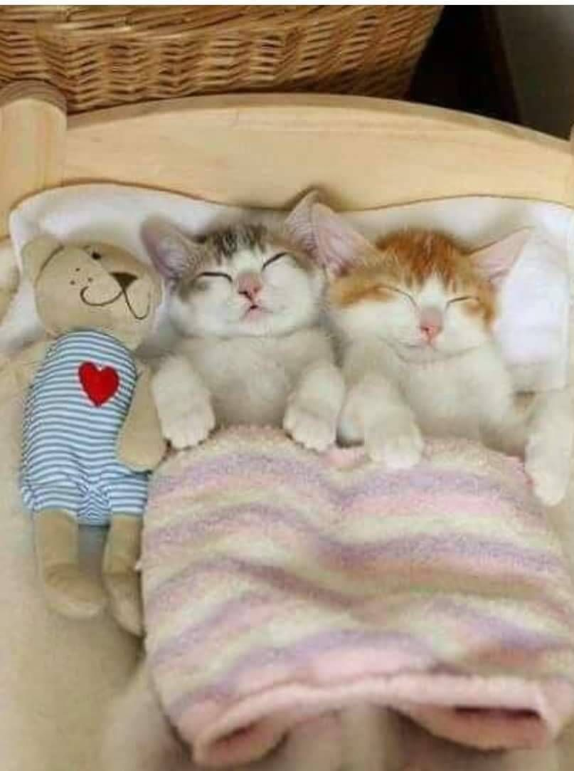 Little Cuties Snug As A Bug In A Rug So Adorable Kittens Cutest Kittens Cute Cats