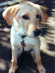 Many Vancouver dogs start walking with us from their earliest years.