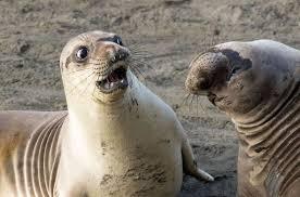 National Geographic Animals Busqueda De Google Funny Animal Photos Cute Seals Animals