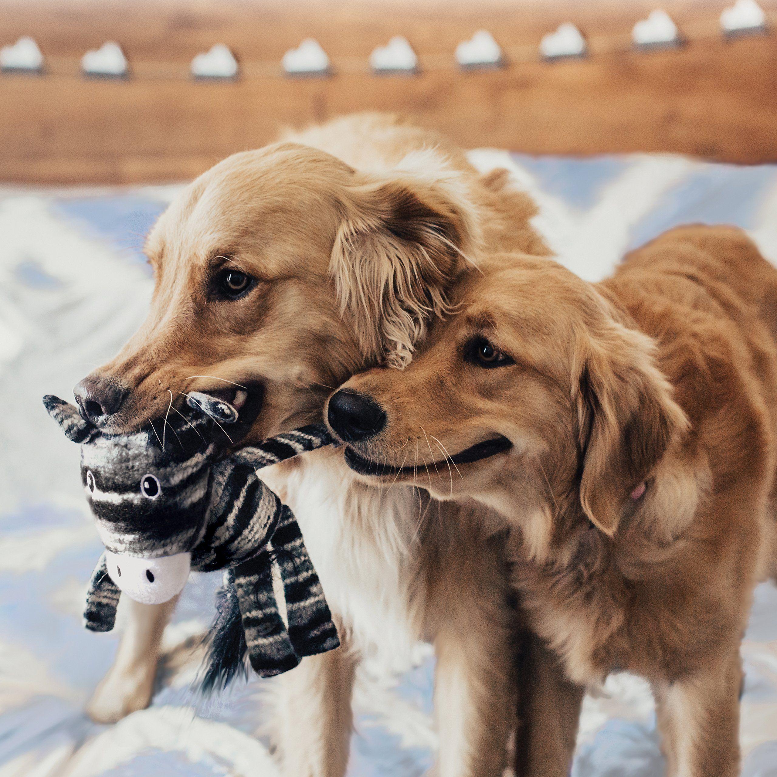 Small Dog Toys Kong Yarnimals Zebra Xs Sm Dog Toy Dog Toy Dog