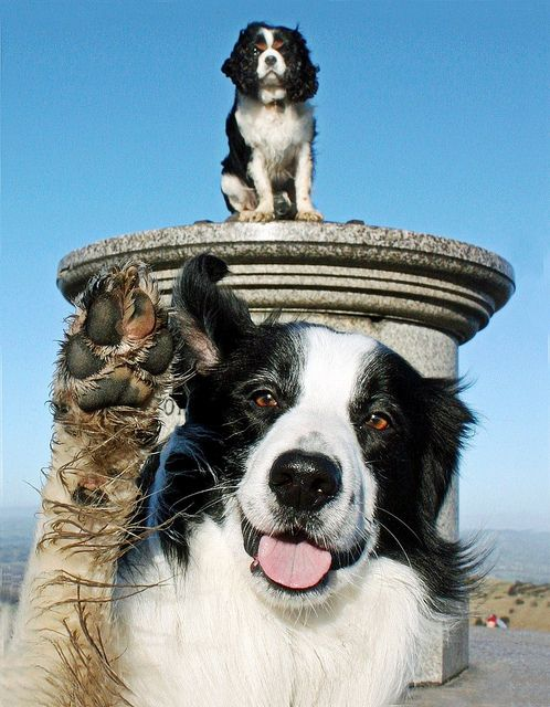 #The Camera Hogging Dog  Like,Repin,Share, Thanks!