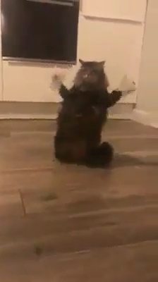 Poor kitty ��
