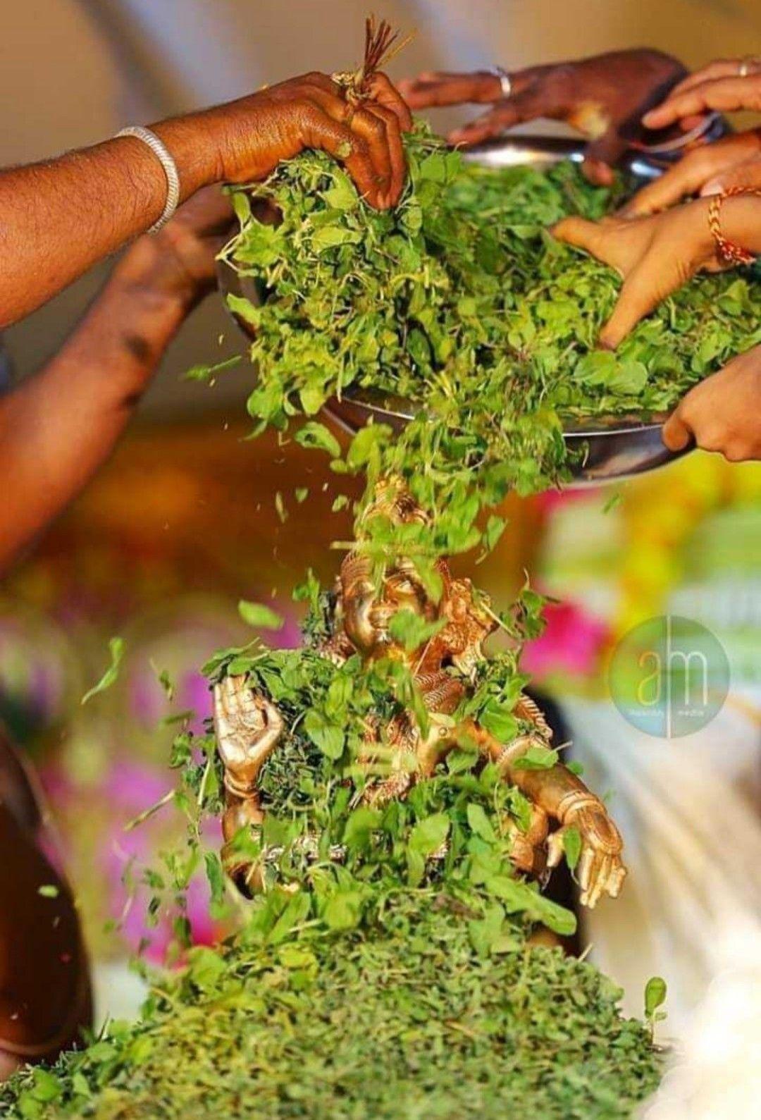 Pin by Angel on சுவாமியே சரணம் ஐயப்பா in 2020 Herbs