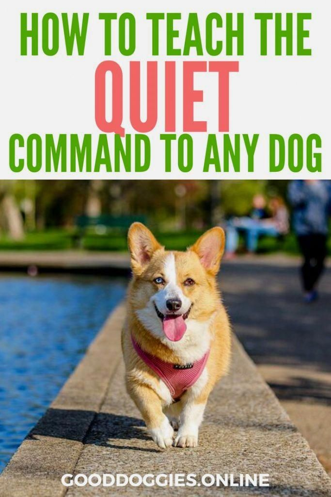 Dog Training Boot Camp Click Pic For Many Dog Obedience And Care