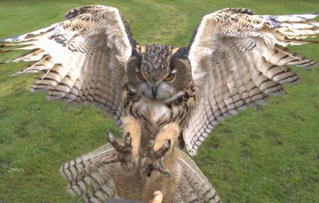 Owl Flying At Your Face In Slow-Motion HD | Geekologie