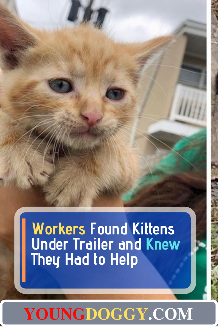 Workers Found Kittens Under Trailer And Knew They Had To Help