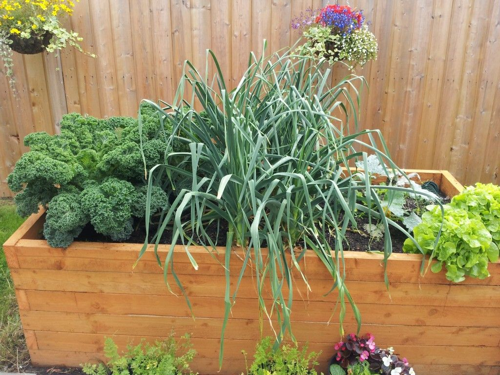 14 vegetables to grow in a small raised bed