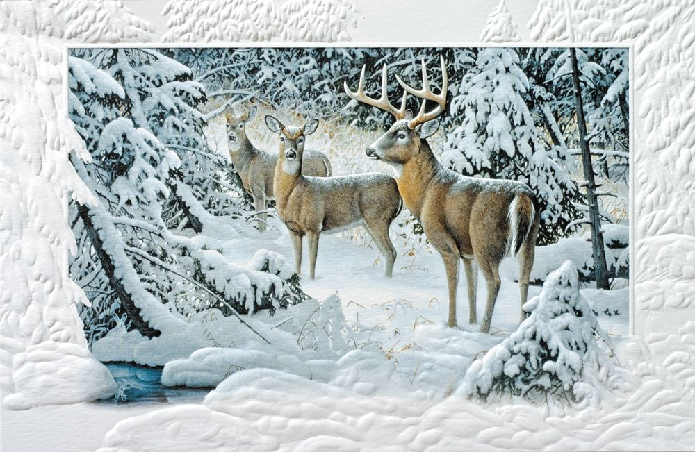 Wildlife Christmas Cards.The Edge Of Light Wildlife Greeting Cards Discount
