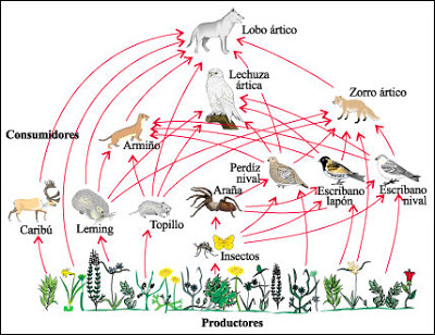 Nicho Ecologico Nicho Ecologico Biologia Nicho