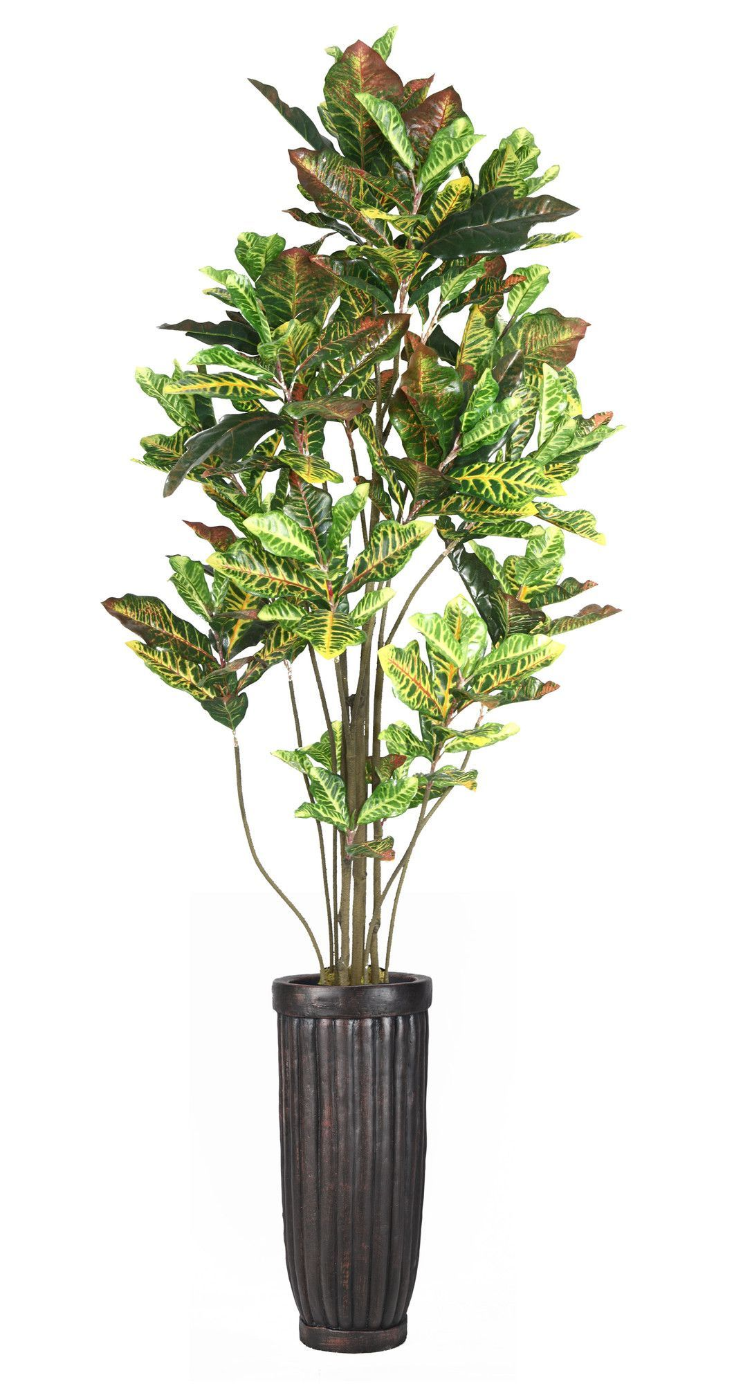 Laura Ashley Home Croton Tree in Planter flower 花