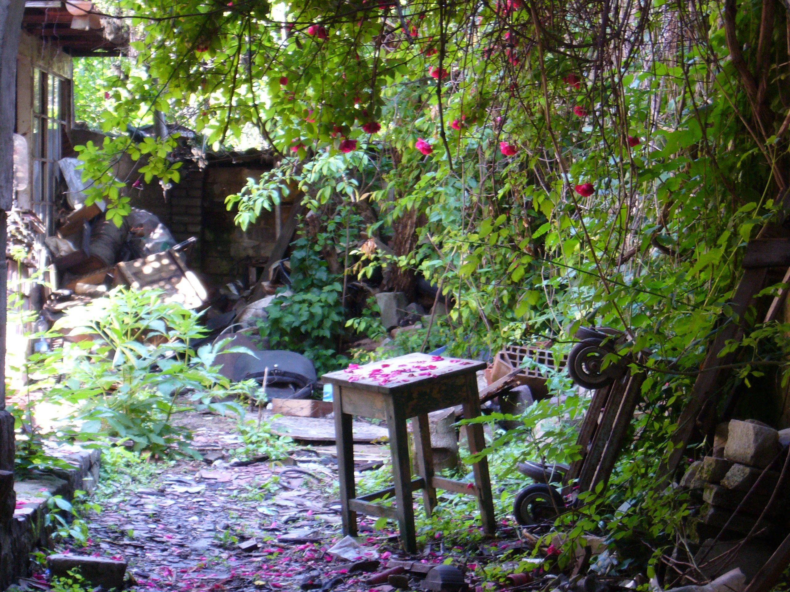 Hidden garden In Buda, district II