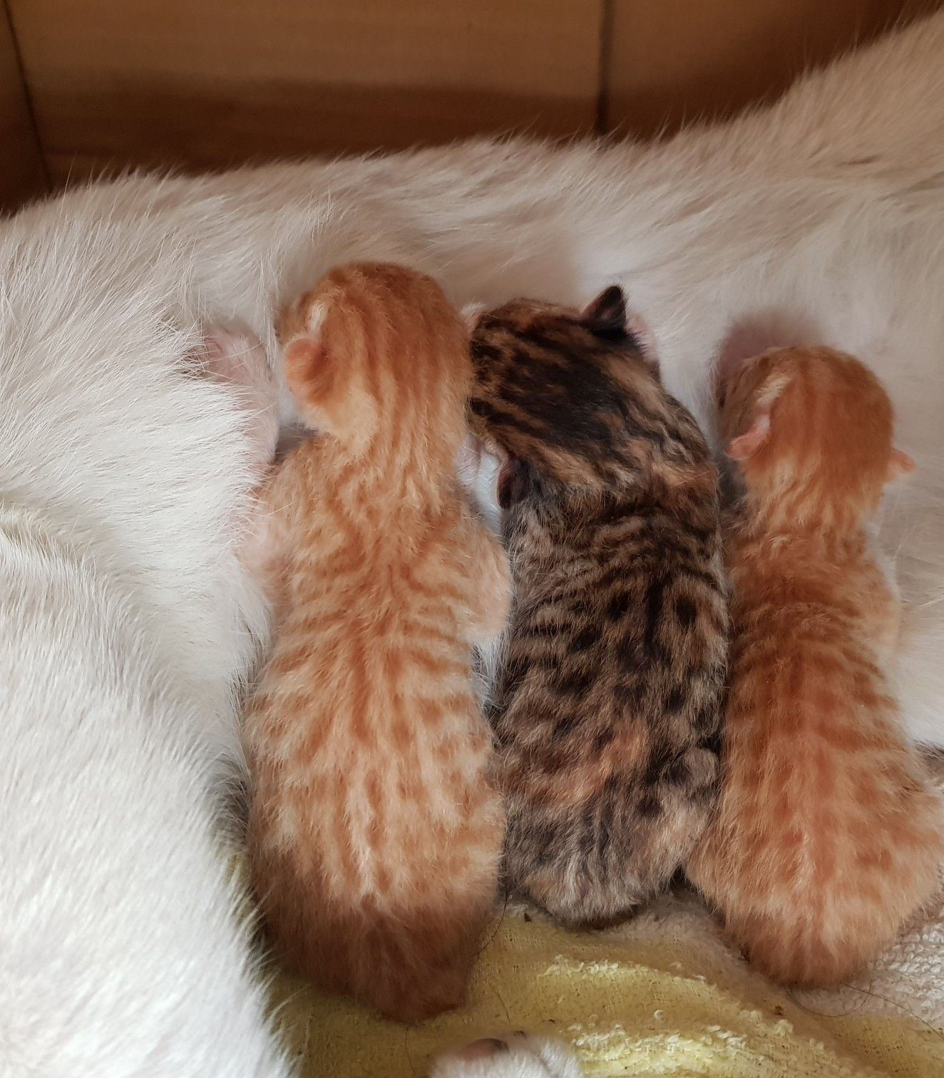 1 Day Old Kittens Kittens Animals And Pets Pets
