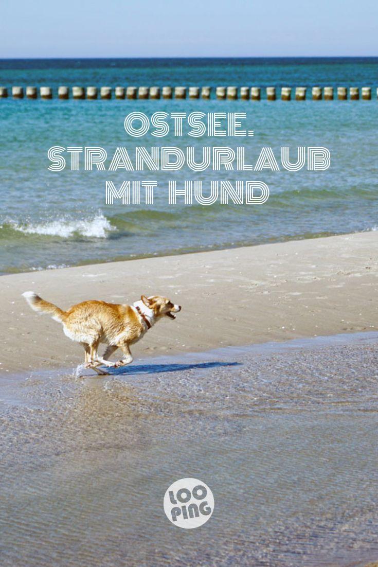Strandurlaub mit Hund. Ein Wochenende auf dem Darß an der