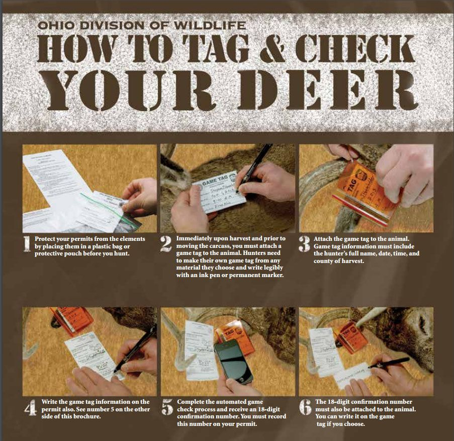 How to tag and check your deer in Ohio, deer check, hunting deer