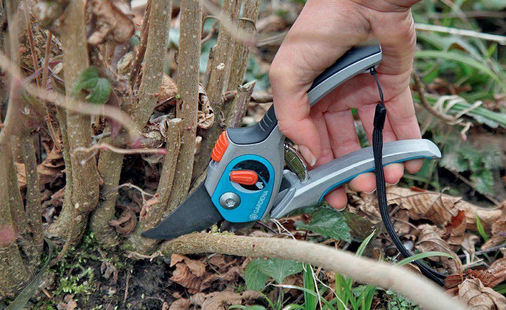 Die 3 Wichtigsten Gartenarbeiten Im Januar Gartenarbeit Unkraut Im Garten Gartenbuch