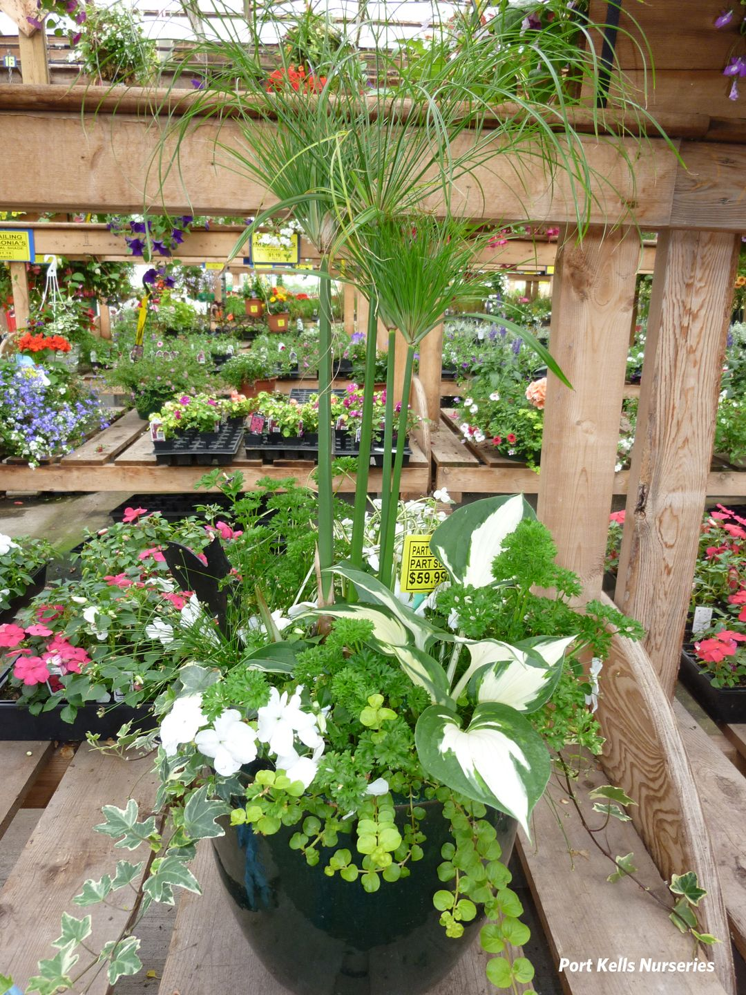 Shade to part shade container using a mix of perennial water and annual plants dwarf papyrus - Trees for shade in small spaces concept ...