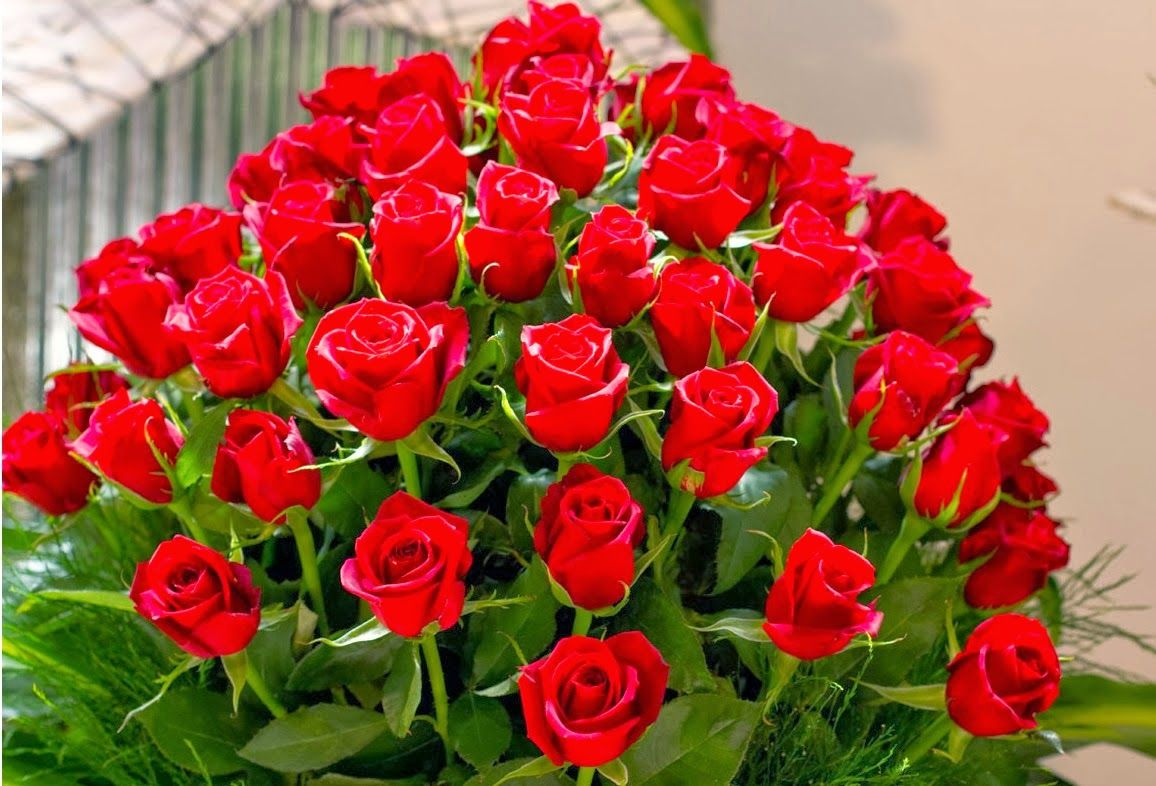 Beautiful Rose Flowers With Friendship Quotes Happy Rose Day Sms