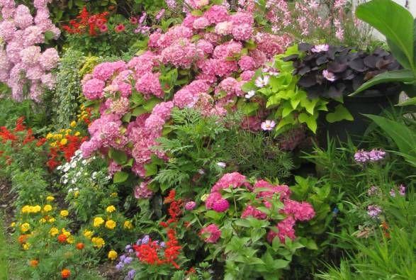 faire un massif d 39 hortensias jardin massif jardin massif hortensias et massif. Black Bedroom Furniture Sets. Home Design Ideas