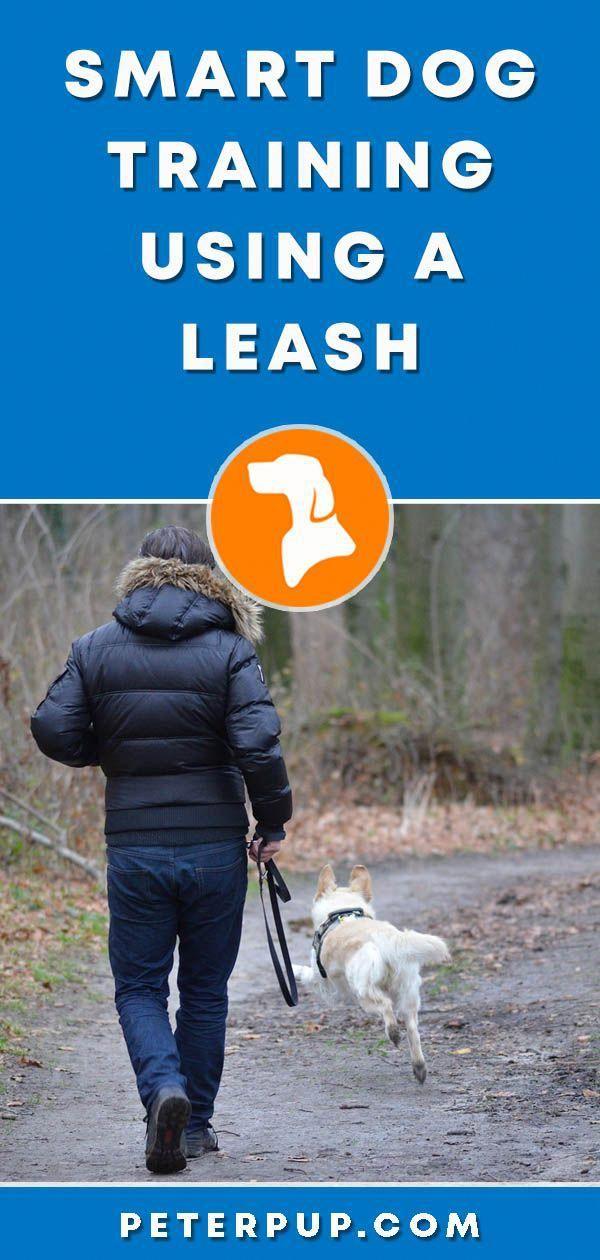 Basic Dog Training Dogtrainingatlanta 7241389828