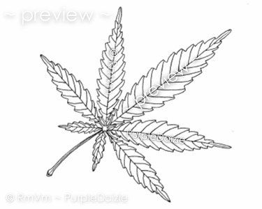 Printable adult color page marijuana mary jane cannabis for Weed leaf template