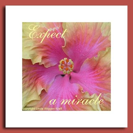Items Similar To Expect A Miracle Hibiscus Flower Mandala Inspirations Signed Fine Art Photograph On Etsy Flower Mandala Hibiscus Flowers Hibiscus