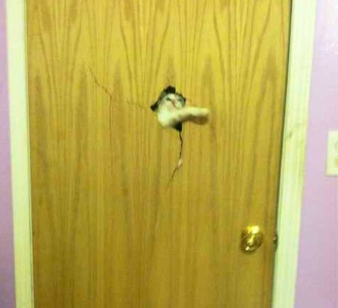 """Here's Johnny! (""""The Shining"""" cat)"""
