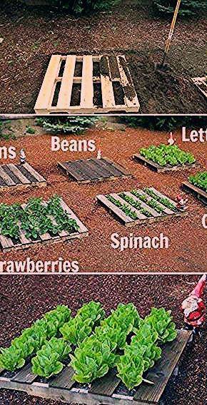 Photo of Die 20 besten Design-Ideen für Gemüsegärten für ein umweltbewusstes Leben – Garten