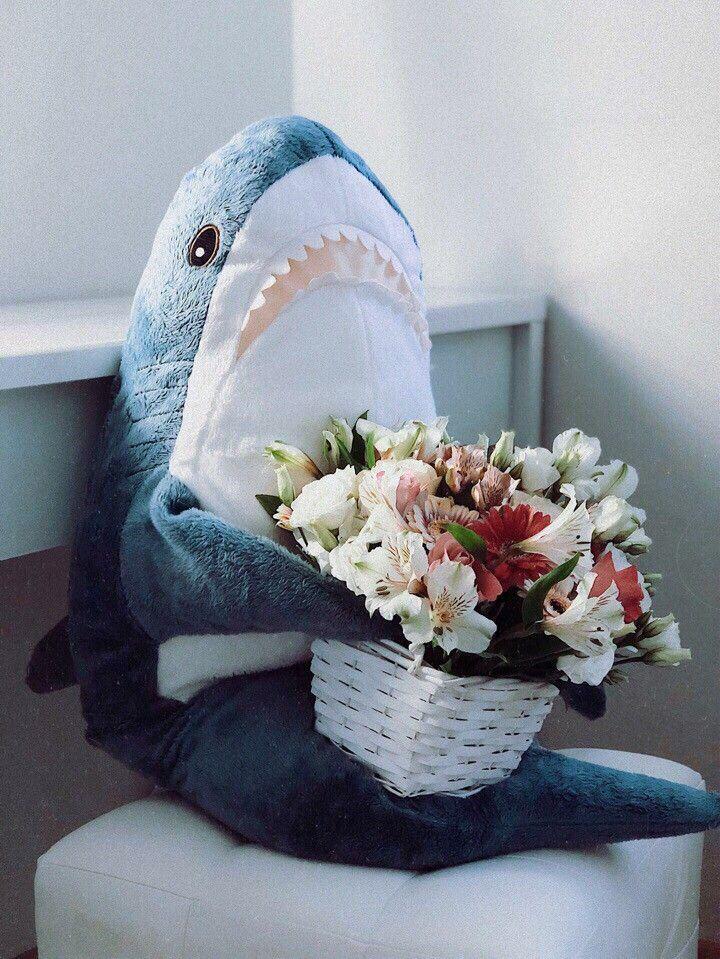 Акула икеа Мем акула, Акула, Хиппи обои