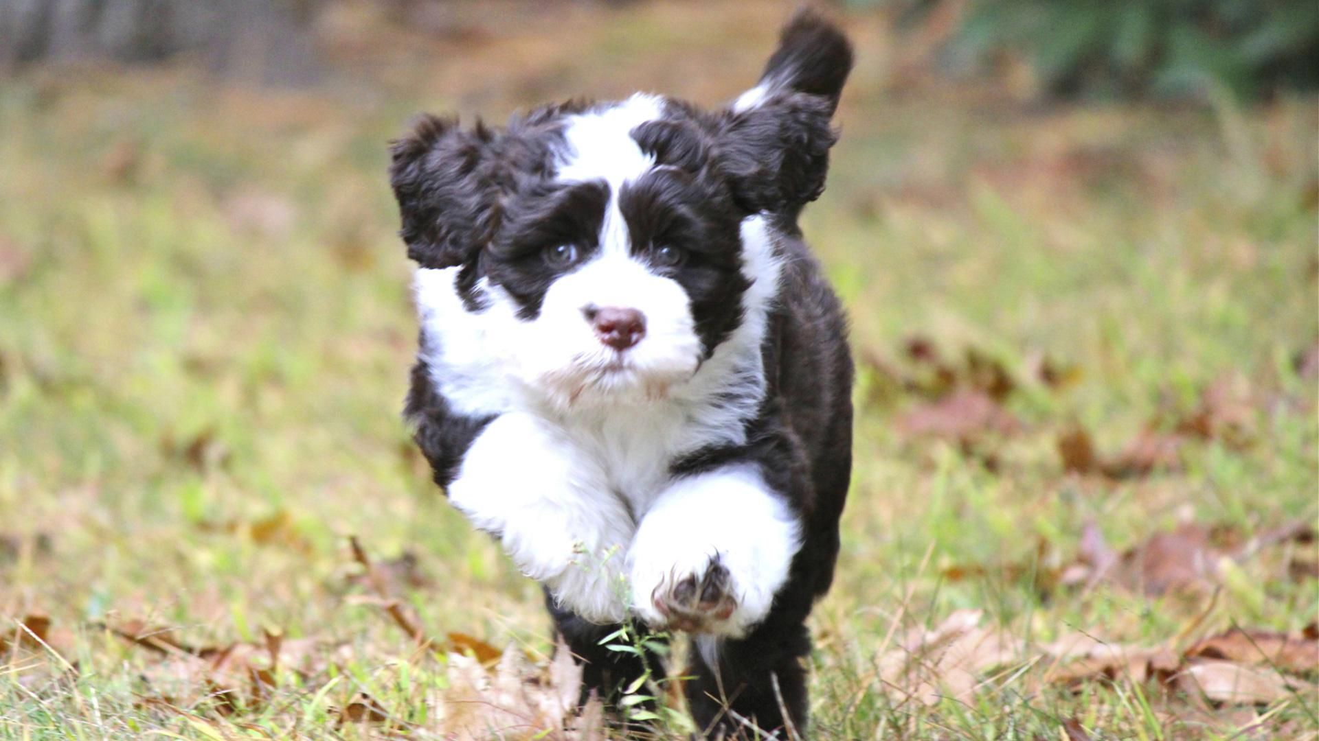 Meet The Breed Portuguese Water Dog 1 920 1 080 Pixels Dog Breeds Medium Best Dogs For Kids Dogs And Kids