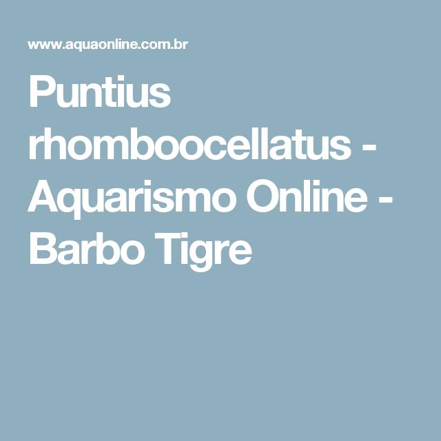 Puntius rhomboocellatus - Aquarismo Online - Barbo Tigre