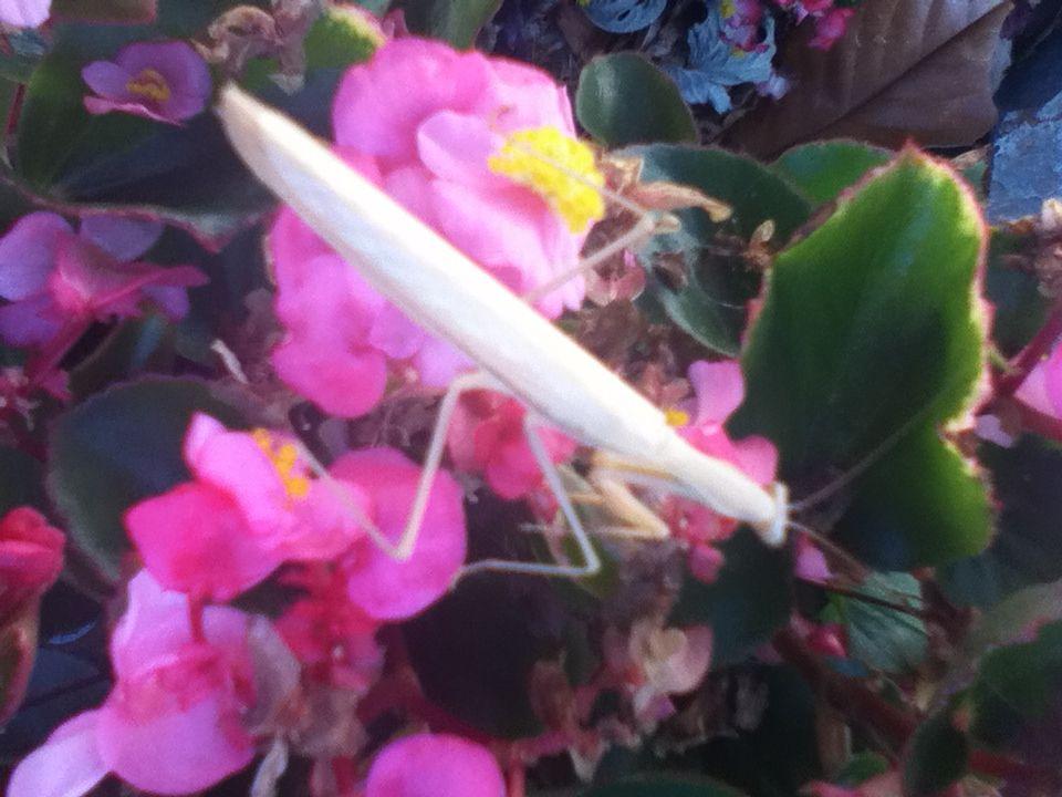 Praying mantis up close.