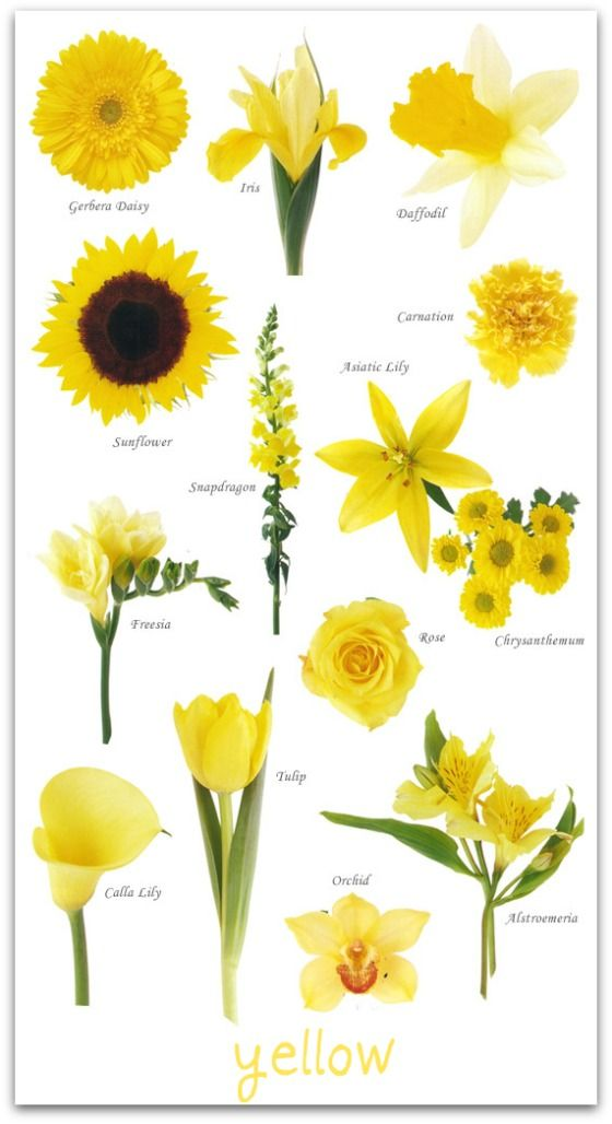 Wedding flowers by colour yellow wedding flowers pinterest wedding flowers by colour yellow mightylinksfo