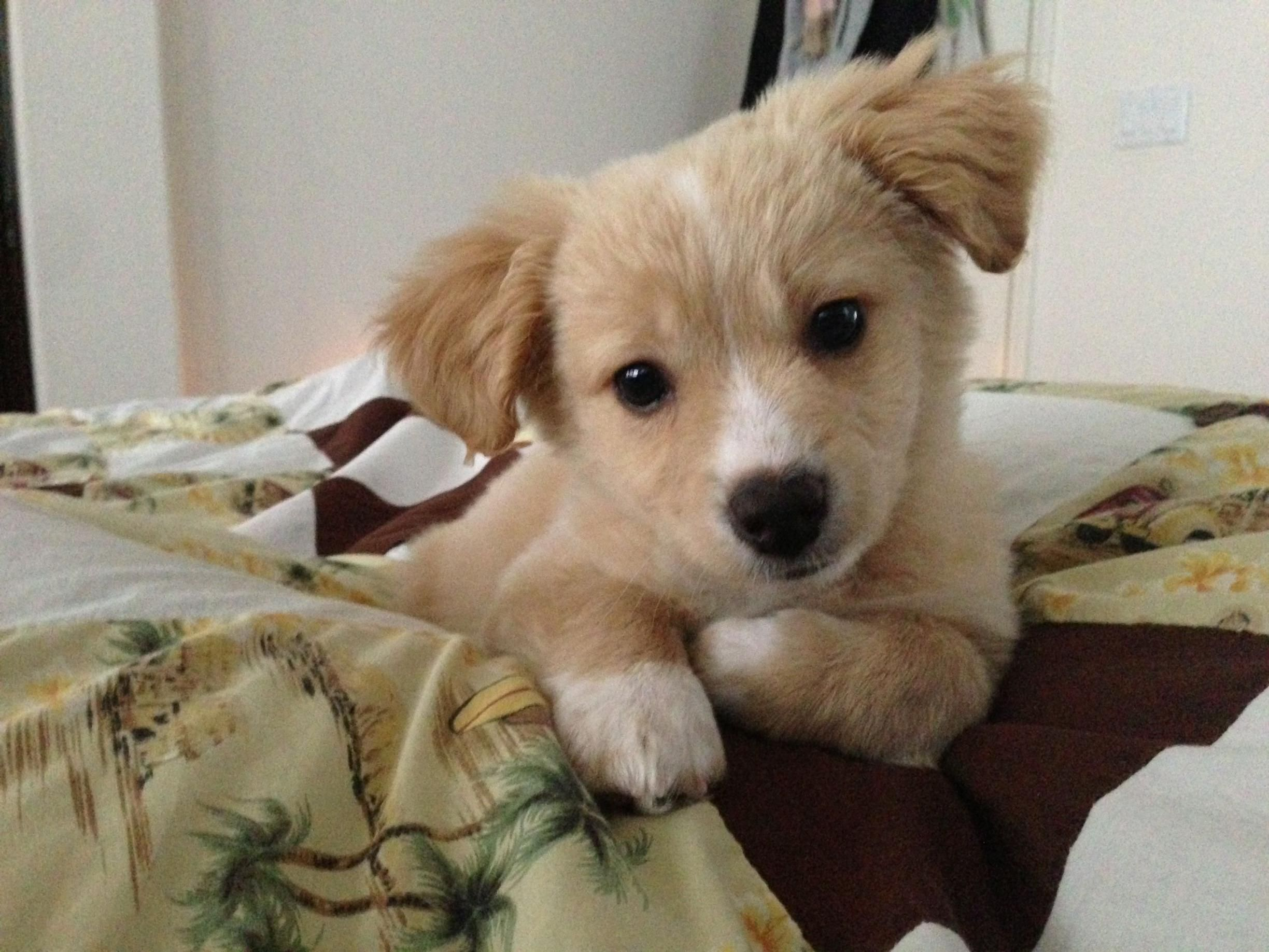 Beagle Border Collie Mix Puppy Dog Pictures Gorgeous Dogs