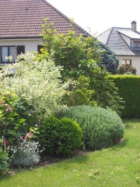 massif d 39 arbustes pour haie basse jardin pinterest