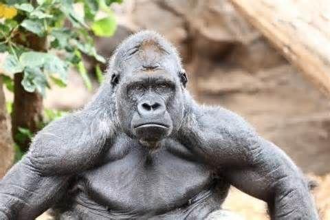 Pin de Arnie Chapman en African Animals | Pinterest | Salvajes ...