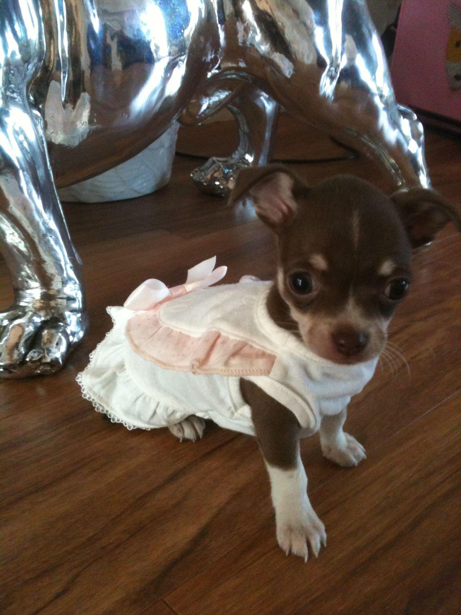 Queenies 1st Baby Dress Www Licksoflondon Com Celebdog