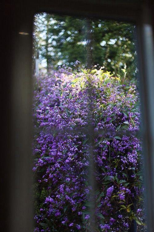 garden window   Tumblr