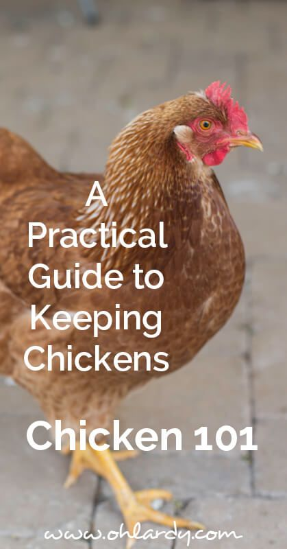 A Practical Guide to Keeping Chickens, Chicken 101 - Oh Lardy! Want all the Oh Lardy awesomeness delivered right to your inbox?  Grab our newsletter here: https://il313.infusionsoft.com/app/form/d0d7082c8e0308d3bca548dedc511cae