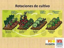 Resultado de imagen de rotaciones de cultivo huertos for Rotacion cultivos agricultura ecologica