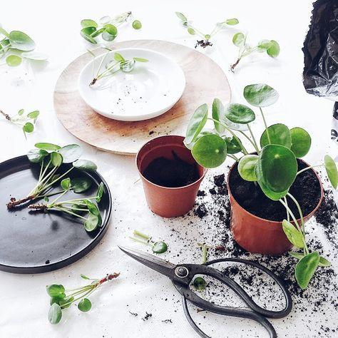 Pflanzen im stimmungsvollen Porzellan-Tannenwald, alle Fragen und - tipps pflege pflanzen wintergarten