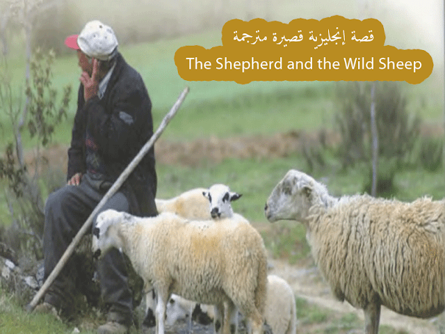 قصة إنجليزي مترجمة للمبتدئين The Shepherd And The Wild Sheep The Shepherd Shepherd Sheep