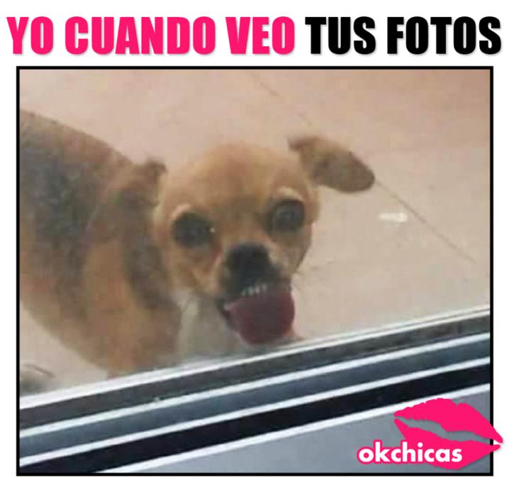 20 Divertidos Memes De Perros Que Te Haran Llorar De Risa Memes Perros Llorando De Risa Memes Divertidos
