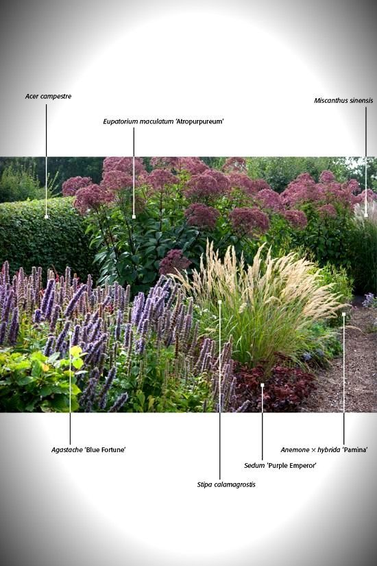 Photo of Garden Book – Garden Bloggers' Bloom Day — September 2012