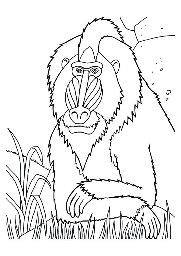 Mandrill Coloring Page From Mom Junction Coloring Pages Winter