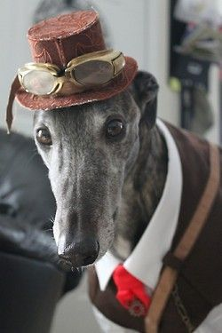 I'm surprised to see another greyhound dressed better than Austin.