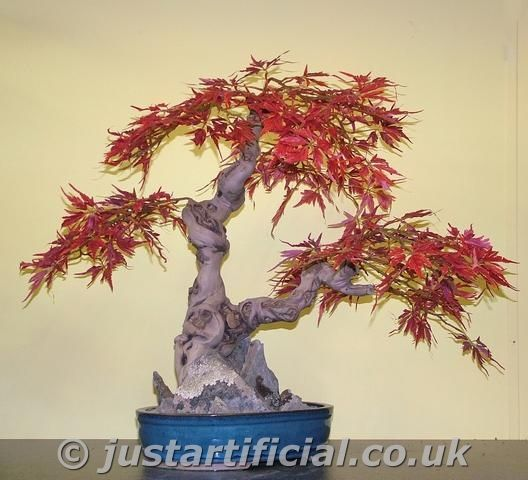 Artificial Japanese Maple Bonsai Tree Just Artificial