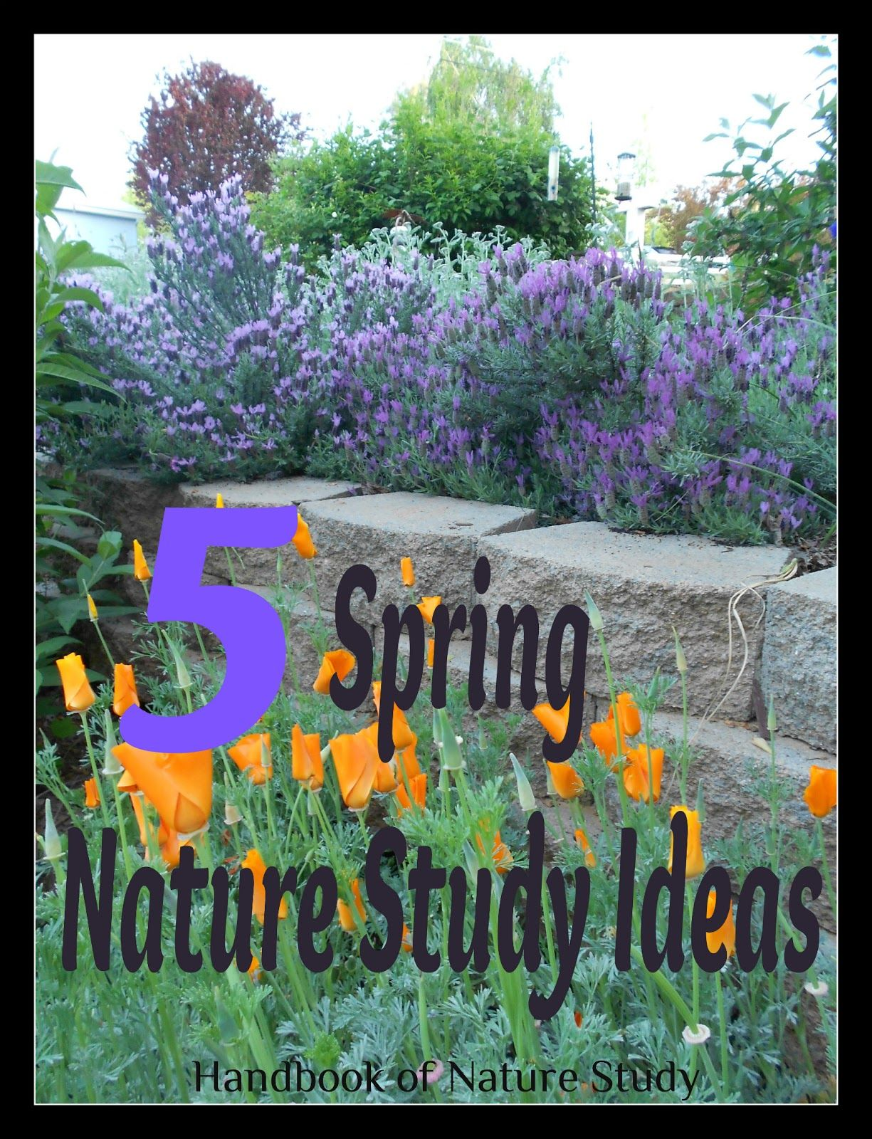 5 Spring Nature Study Ideas