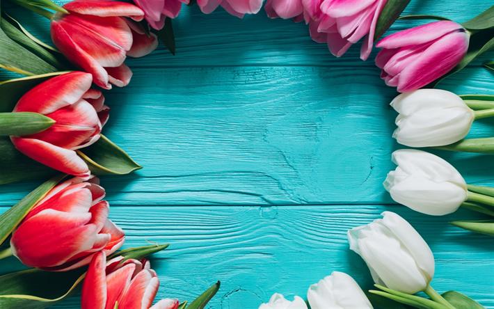 Herunterladen hintergrundbild rosa tulpen, blume, frame, frühling ...