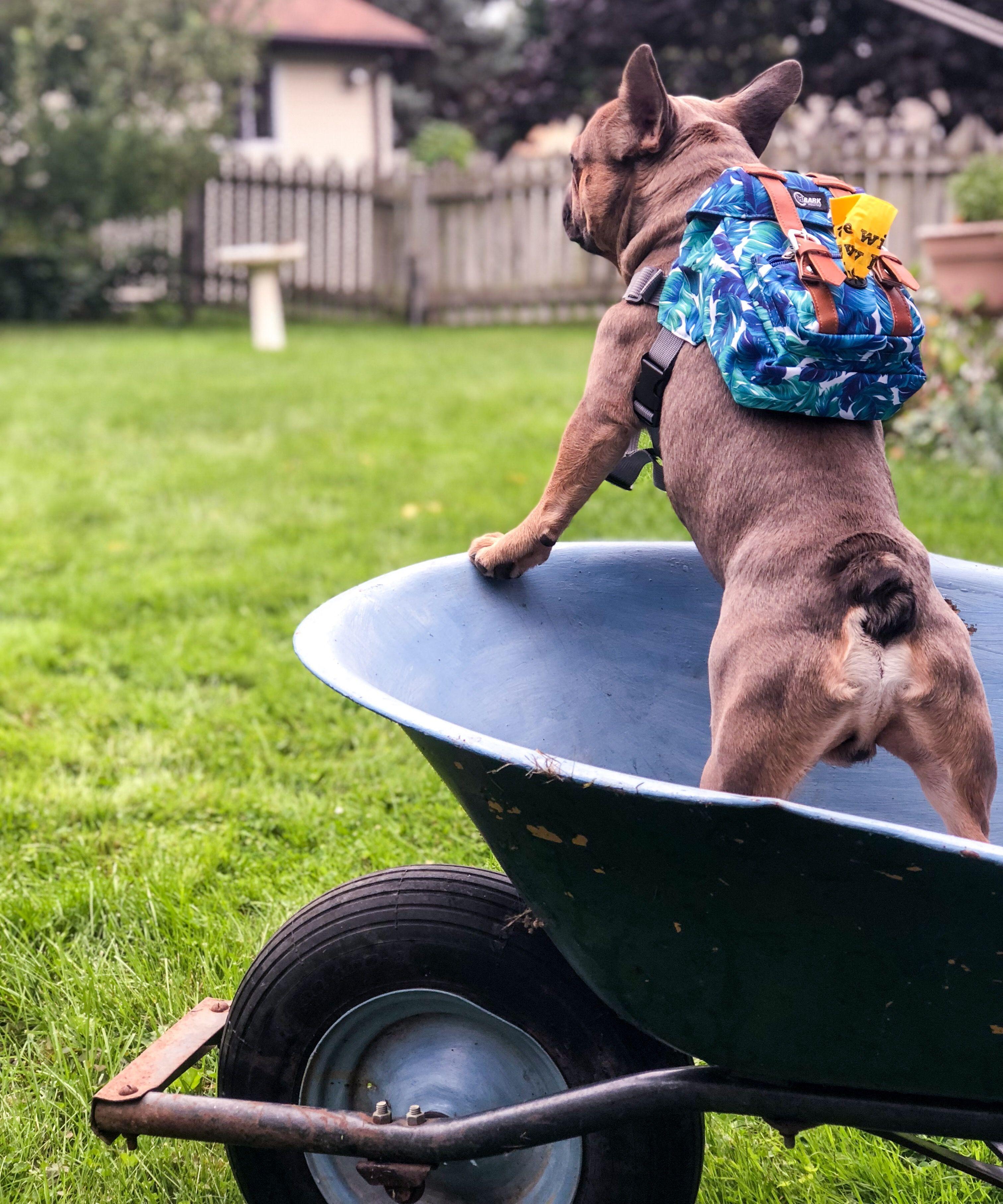 Dog Backpack Dog Backpack Diy Dog Backpack Harness Dog Backpack Hiking Dog Backpack Carrier Backpacks For Dogs B Dog Training Bulldog Puppies Training Your Dog